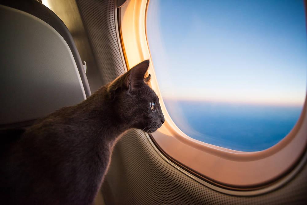 Transporte de mascotas por avión
