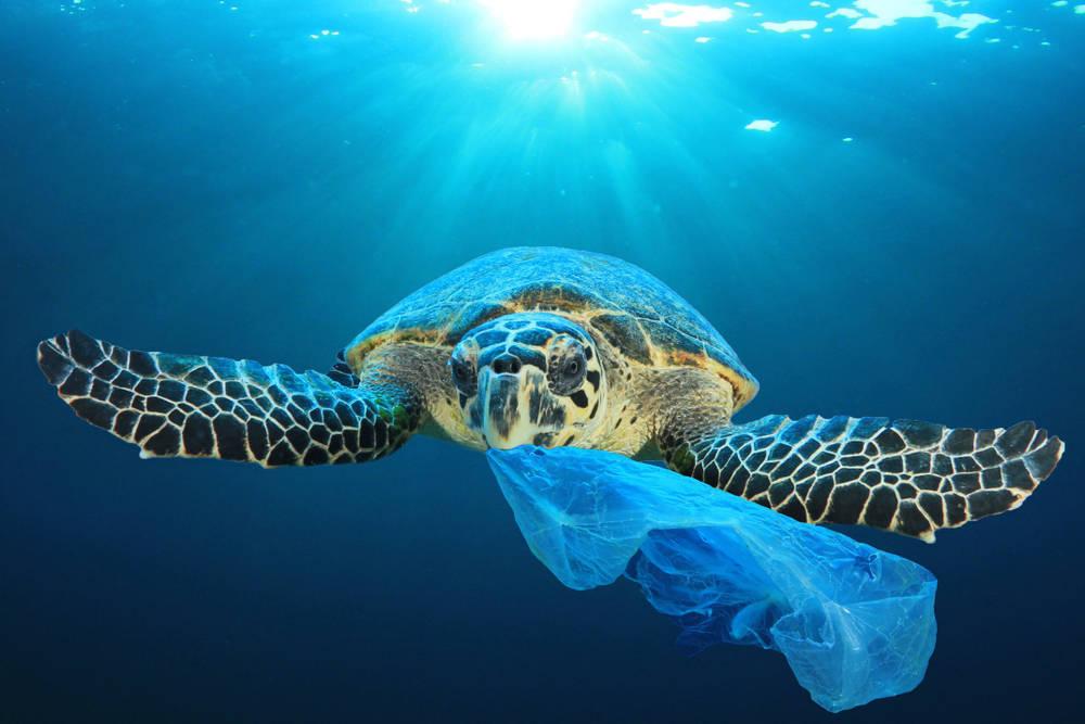 Limita el consumo de plásticos en tu día a día